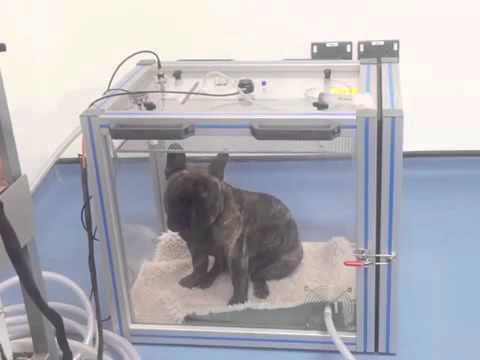 Whole-body barometric plethysmography test (cambridge boas research group)