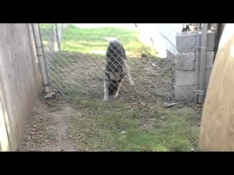 Dog going under a fence
