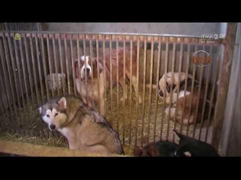 Magazyn Ekspresu Reporterów - Fabryki psów