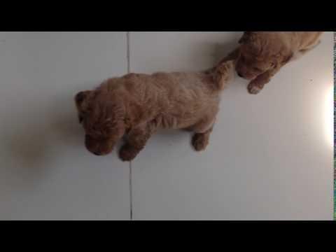 (IMG 1001) Peeing Pup