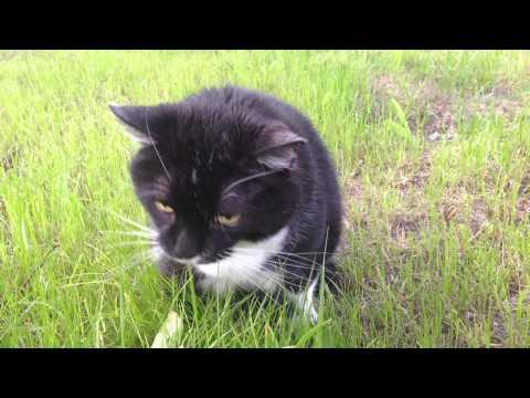 Funny cat vomiting