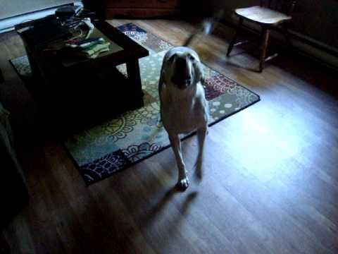 Happy Dog Barking Loud