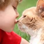 FIV u kota: czy człowiek może zarazić się kocim AIDS?