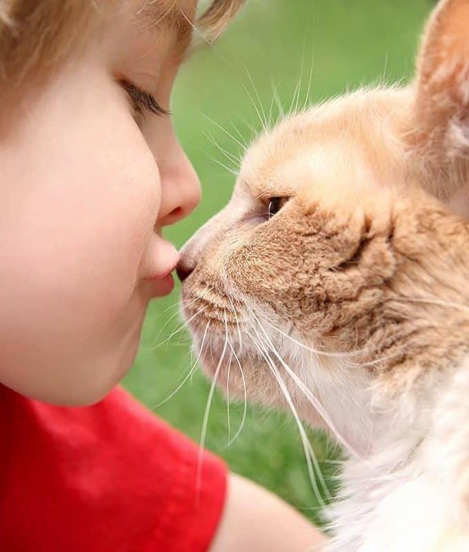 Czy FIV można zarazić się od kota?
