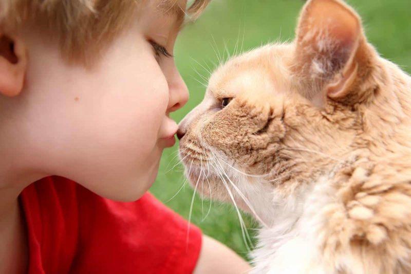 FIV u kota: jak go rozpoznać i człowiek może zarazić się kocim AIDS?