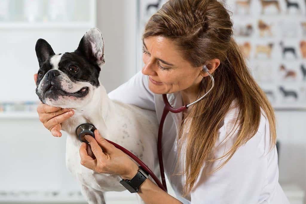 Zapadanie tchawicy u psa: objawy