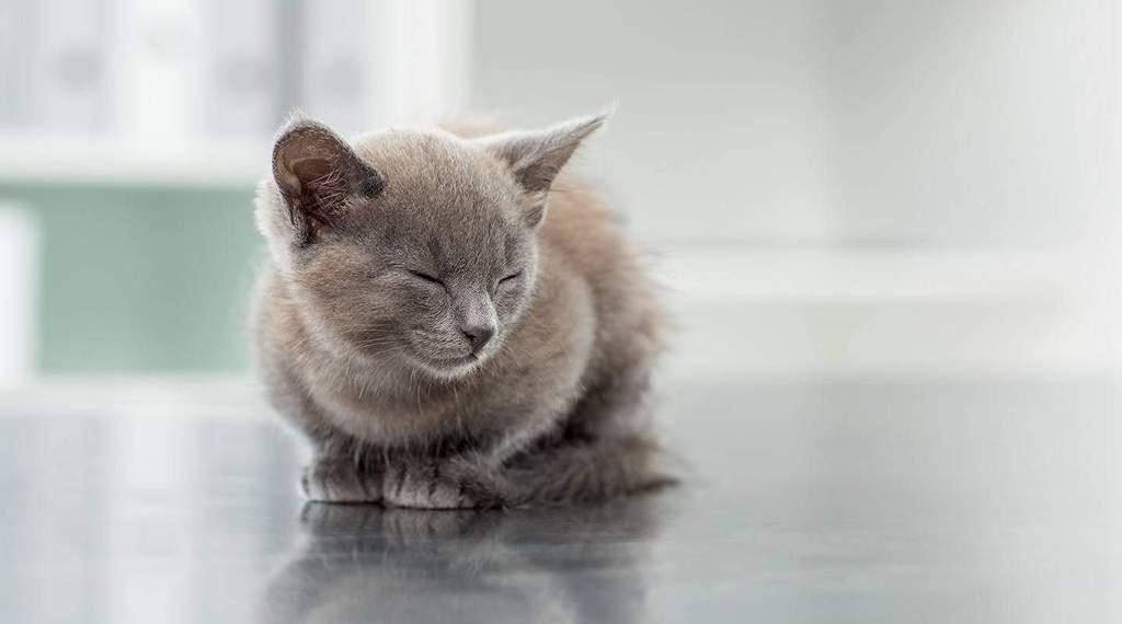 Koci katar objawy i leczenie