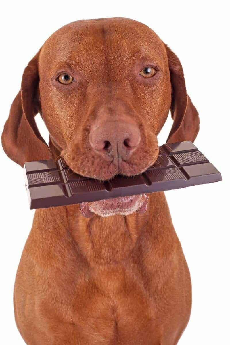 Czy czekolada jest trująca dla Twojego psa?