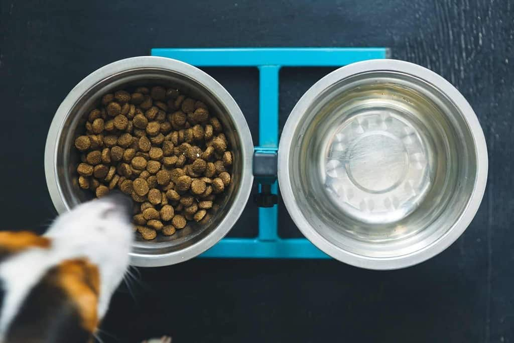 Jak rozpoznać skręt żołądka u psa?