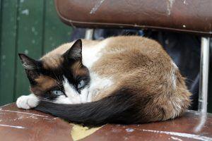 Astma u kota – przyczyny, objawy, diagnostyka i leczenie