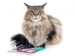 Jak rozpoznać nowotwór u kota i czy chłoniak jest uleczalny?