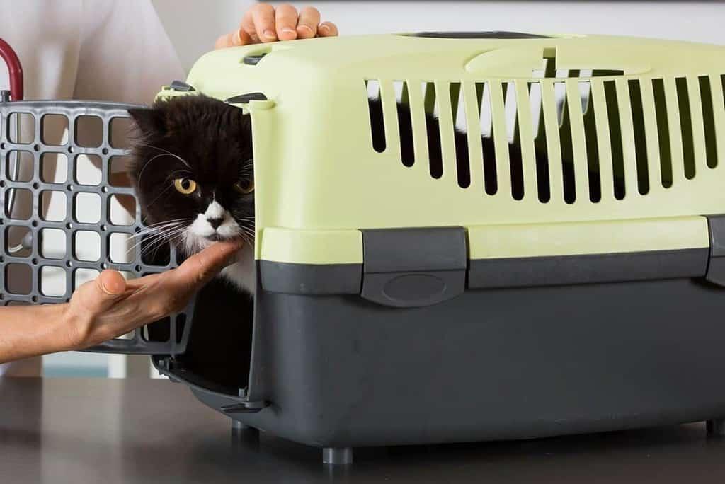Czym jest kocia astma?