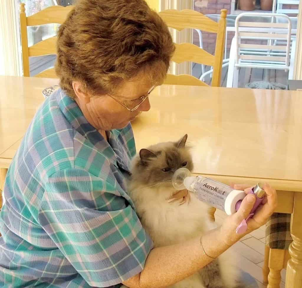 Inhalator dla kota