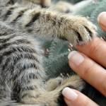 Białaczka u kota FeLV: jak rozpoznać i leczyć kocią białaczkę?