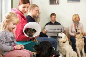 Kastracja/sterylizacja psa i kota