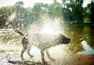 Udar cieplny/przegrzanie u psa i kota. Sprawdź jak im zapobiec
