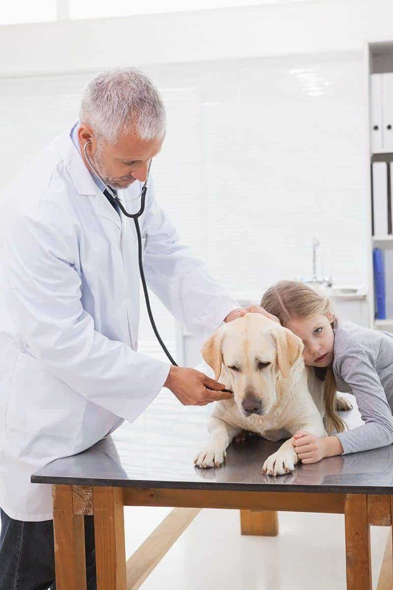 Dirofilarioza u psa objawy