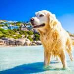 Dirofilarioza u psa i kota: objawy i leczenie inwazji dirofilaria