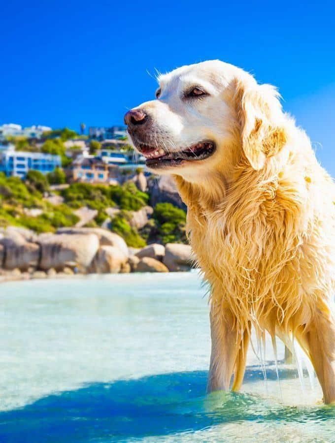 Czy dirofilarioza u psa i kota to realne zagrożenie?