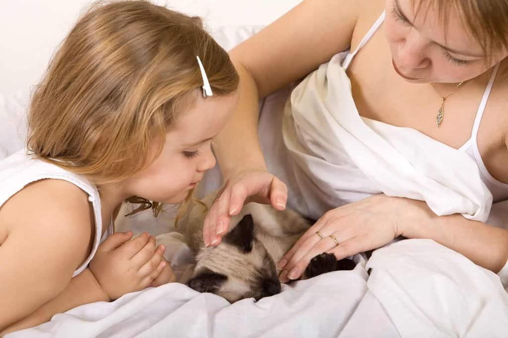 Jak dbać o ciężarną kotkę?