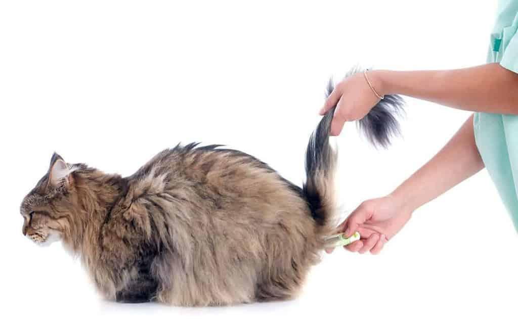 Jak przygotować kota do szczepienia?