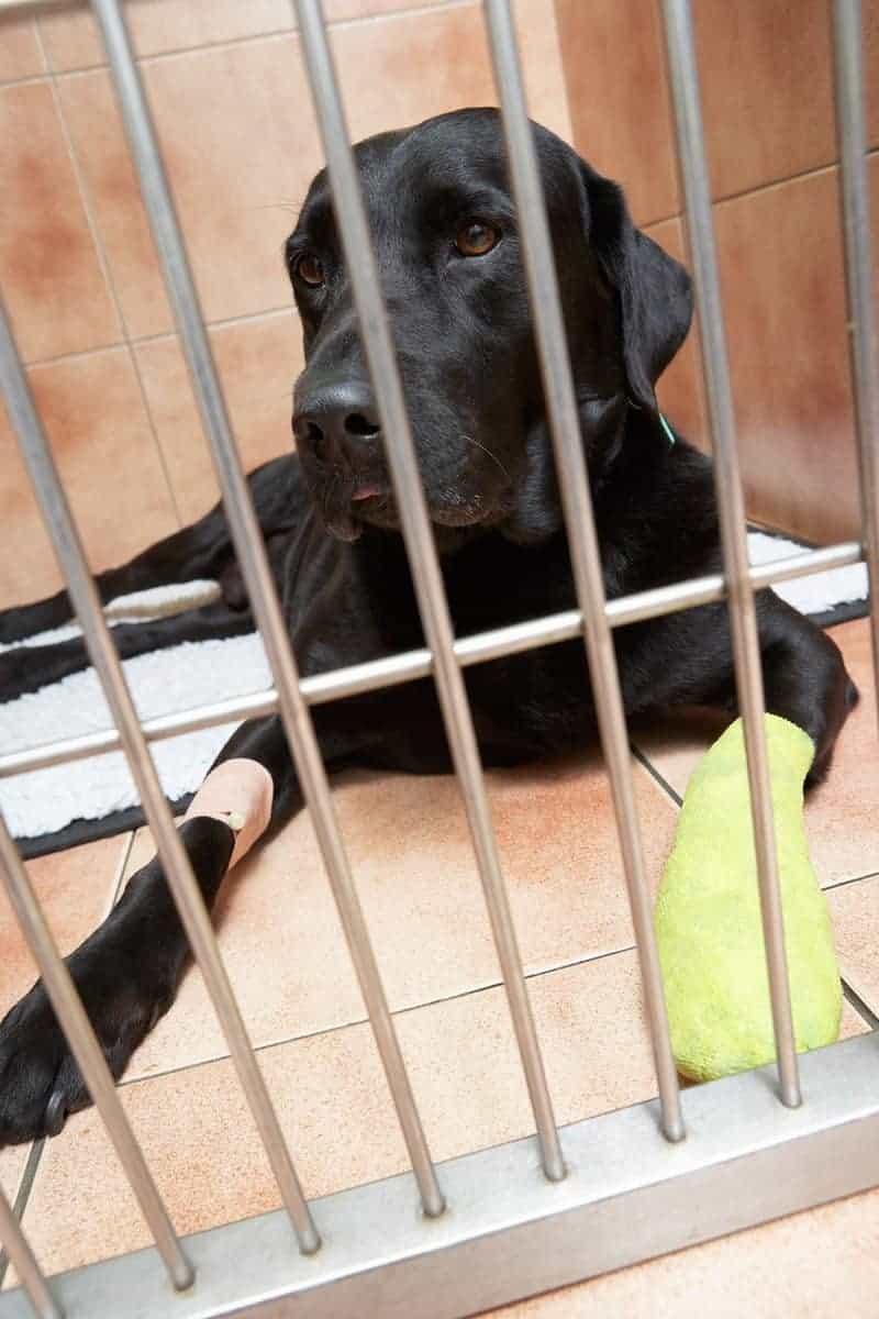 Leczenie poduszek łap u psa