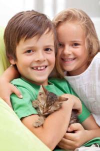 Panleukopenia u kota: objawy i leczenie kociego tyfusu