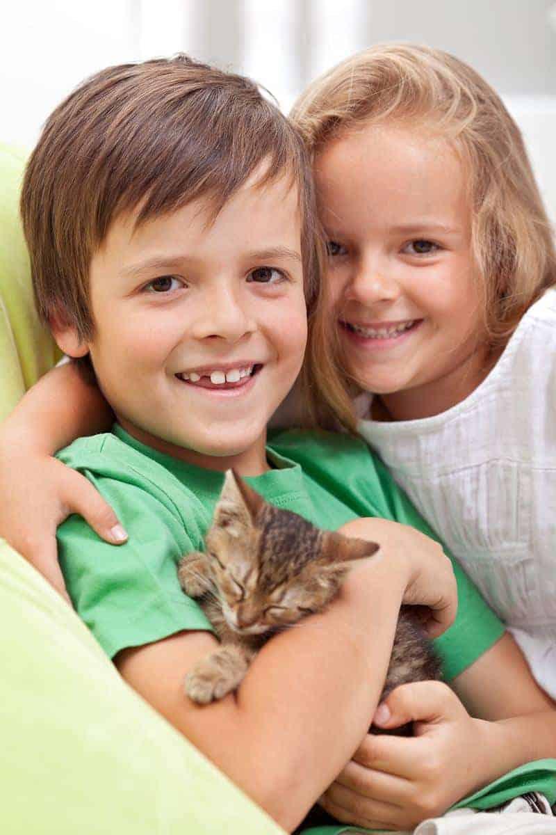 Panleukopenia koci tyfus