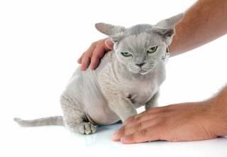 Trudna diagnostyka fip u kociaka
