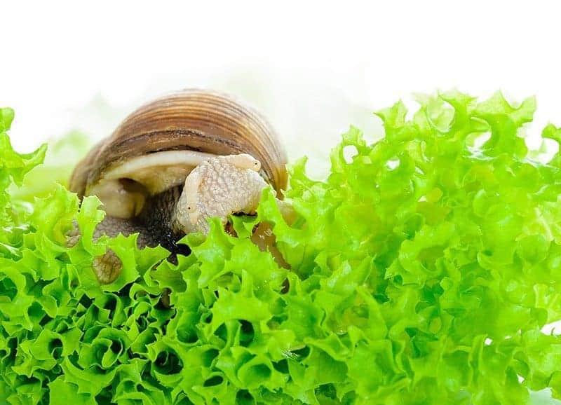 Zatrucie środkiem na ślimaki