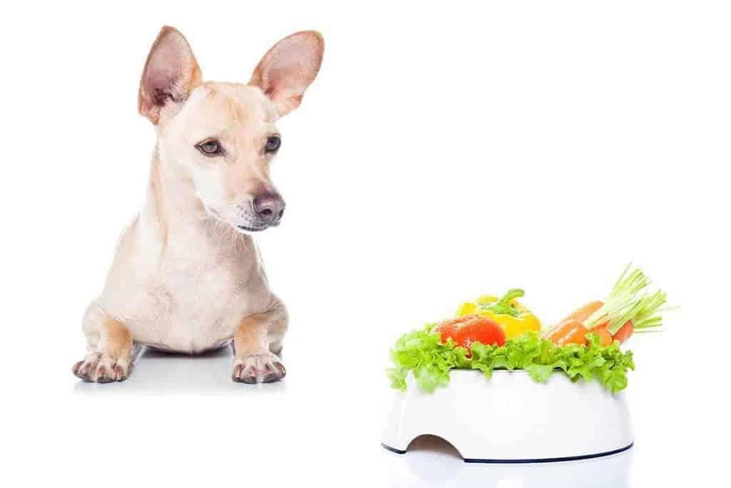 Dieta dla psa z nadwagą