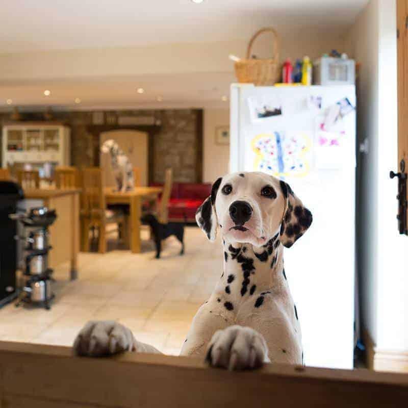 Jak uniknąć zatruciu psa?
