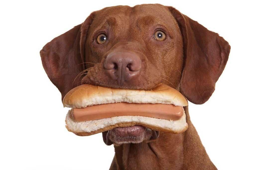 Jakie są objawy zatrucia solą u psa?