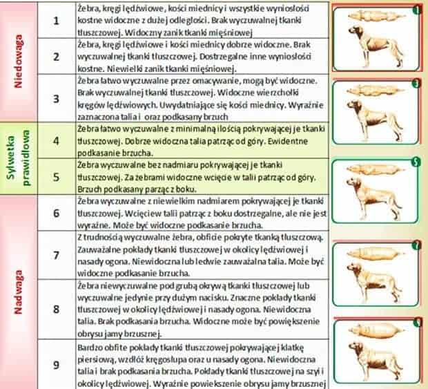 Ocena kondycji ciała psa