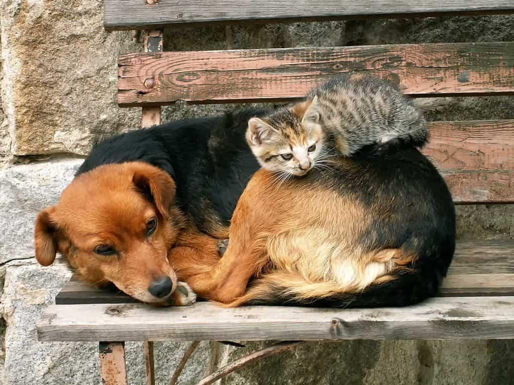 Świerzbowiec u zwierząt objawy i leczenie
