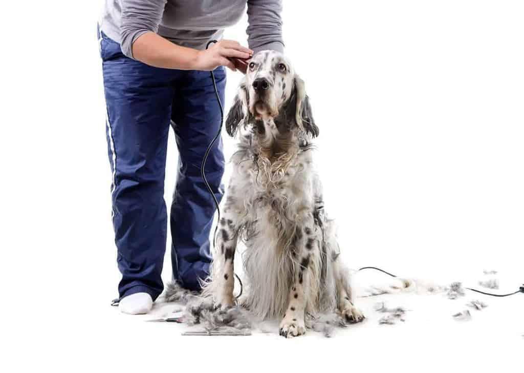 Grzybica u psa leczenie