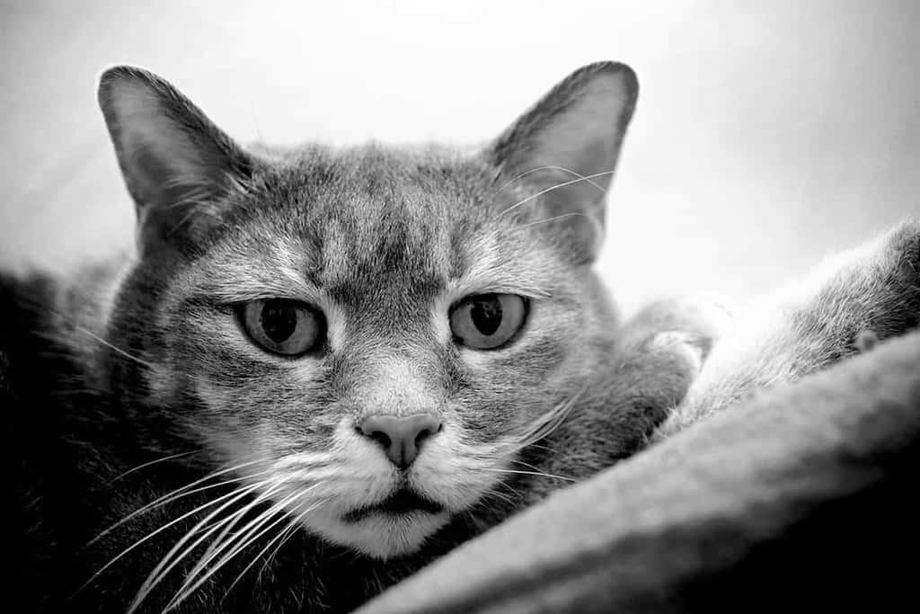W większości koty przegrywają walkę z mięsakiem