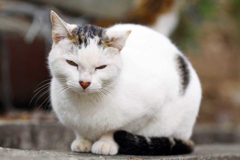 Niewydolność nerek u kota: objawy, dieta i leczenie PNN