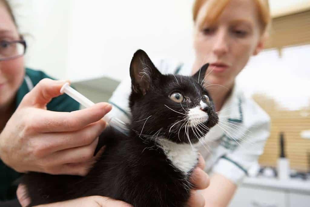 Nowotwór poszczepienny u kota