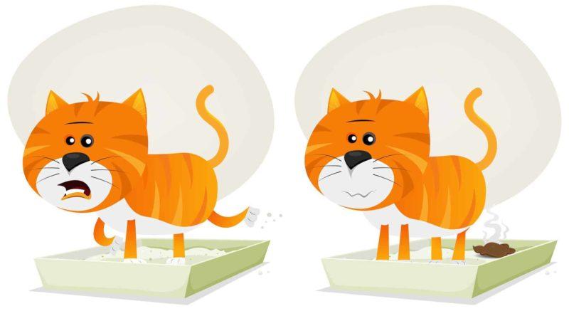 Biegunka u kota: co ją powoduje i co podać na kocią biegunkę?