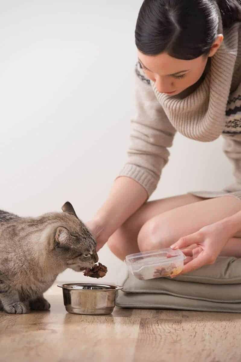Czym karmić zwierzaka z chorobą nowotworową?