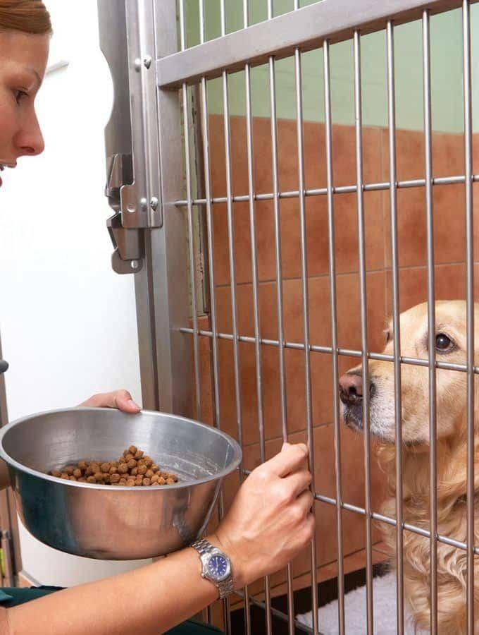 Dieta psa chorego na raka