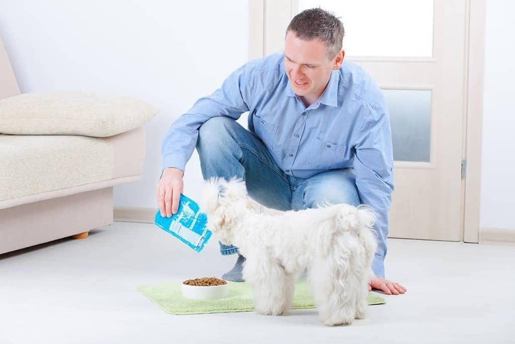 Karma onkologiczna dla psa