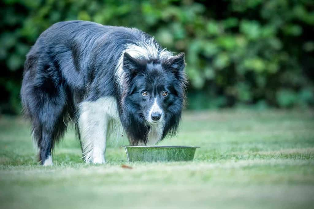 Suplementy na trawienie dla psa
