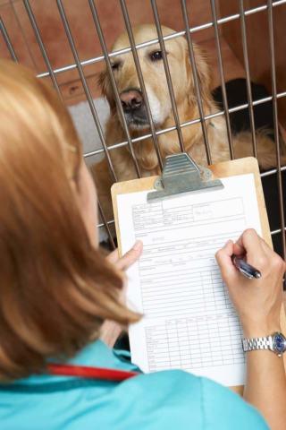 Obserwacja psa w keirunku wścieklizny