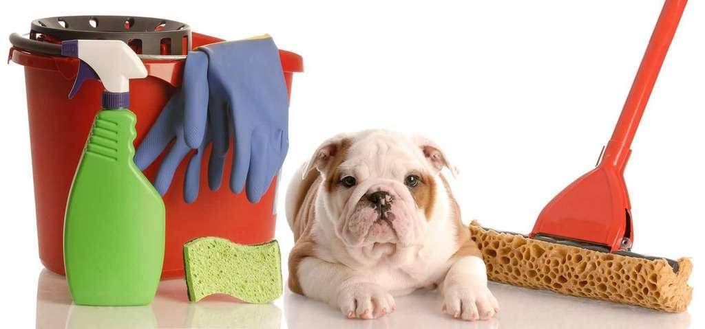 Jakie są przyczyny parwowirozy u psów?