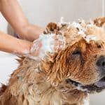 Łupież u psa: co go powoduje? Co na łupież u psa?