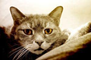 Wymioty u kota: co zrobić kiedy kot wymiotuje?