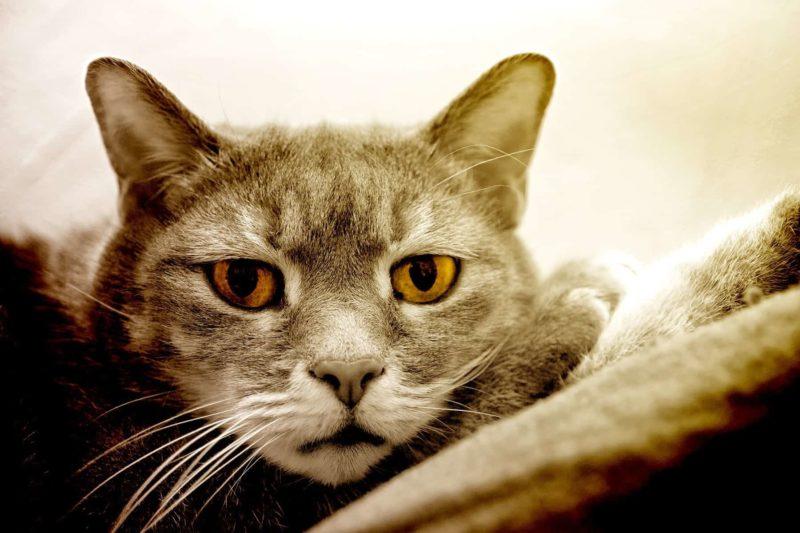 Wymioty u kota: co robić kiedy Twój kot wymiotuje?