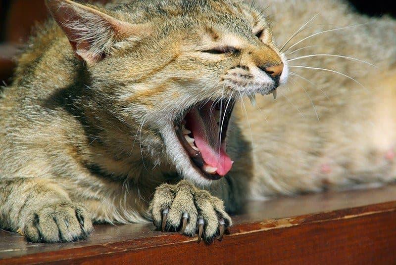 Warto dbać o zęby kota
